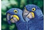 Diamond Dotz - Blue Hyacinth Macaws (Diamond Painting Kit)