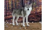 World of Wool - Winston the Wolf (Needle Felting Kit)