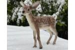 World of Wool - Dixie the Deer (Needle Felting Kit)