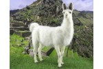 World of Wool - Lennon the Llama (Needle Felting Kit)