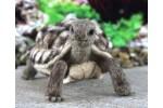 World of Wool - Toto the Tortoise (Needle Felting Kit)