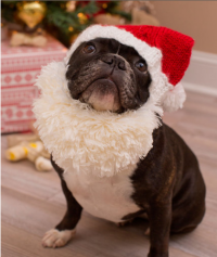 Red Heart - Santa Doggie in Red Heart Soft (downloadable PDF)